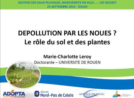 Depollution par les Noues